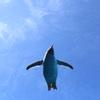ペンギン、空を飛ぶ