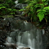梅雨の鳴滝