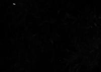 CANON Canon EOS Kiss X4で撮影した(ひ・ら・り)の写真(画像)