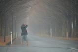 冬ソナのマキノメタセコイア並木道