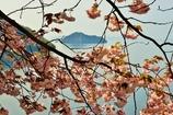奥琵琶湖の春 2