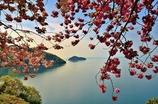 奥琵琶湖の春 1