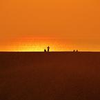 NIKON NIKON D800で撮影した(鳥取砂丘 5-2)の写真(画像)