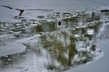 雪の彦根城散策 5