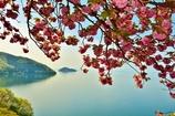 奥琵琶湖の春 3