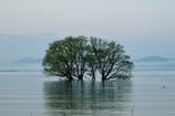 芽吹きの水中木