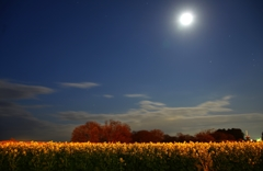 月夜の寒咲花菜