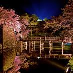 NIKON NIKON D800で撮影した(彦根城表門橋夜桜)の写真(画像)