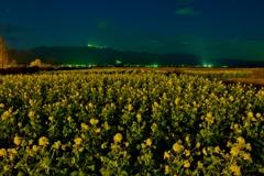 早春の月光の菜の花畑