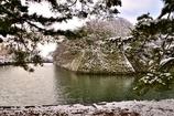 雪の彦根城散策 2