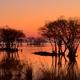 夕焼けの水中木