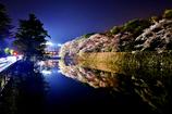 彦根城濠端夜桜