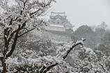 雪の彦根城散策 9