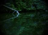 瑞獣の潜む池