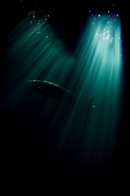 癒されるイルカの画像