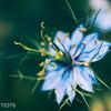 H G P Flowers #36