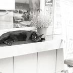 NIKON F3HPで撮影した動物(駐車場の主)の写真(画像)
