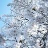 NIKON NIKON D700で撮影した植物(迫りくる春)の写真(画像)