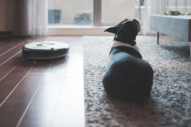 犬とルンバの微妙な関係