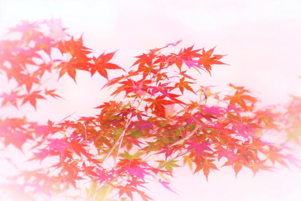 霧と秋色に包まれて(^^♪