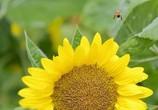 蜂さん..また明日(^^♪