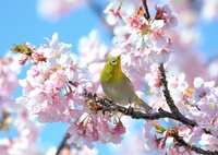 春はパラダイス♪