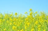 風は春色♪