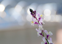 SONY SLT-A57で撮影した(春のリズム)の写真(画像)