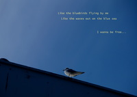 SONY SLT-A57で撮影した(カモメの空)の写真(画像)