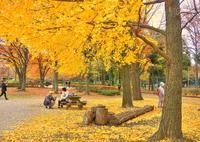 SONY ILCE-6000で撮影した(秋)の写真(画像)