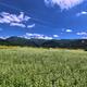 信州田舎のそば畑