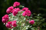bouquet..❀