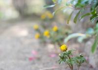 SONY ILCA-77M2で撮影した(Spring has come)の写真(画像)