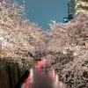 Sakura Dancing