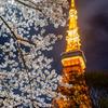 Spring in Tokyo #2