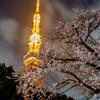 Spring in Tokyo.