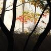 秋彩探し - 霧彩4