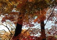 CANON Canon EOS 70Dで撮影した(紅葉散歩Ⅳ)の写真(画像)