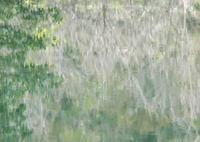 OLYMPUS E-M1で撮影した(山中水面三題 ゆるりと)の写真(画像)
