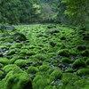 水の消える川