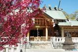 石浜神社の春