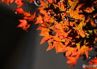 NIKON NIKON D610で撮影した(輝きー②)の写真(画像)