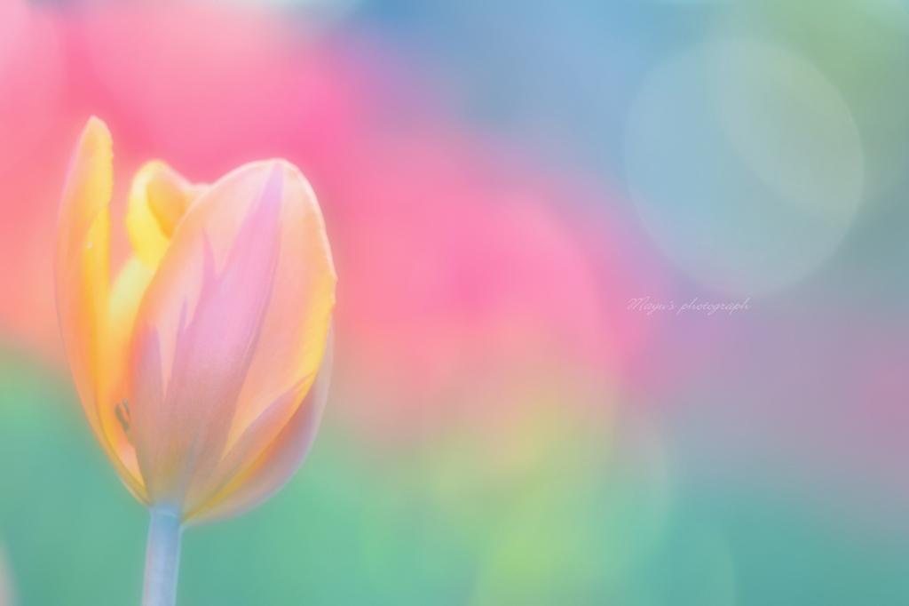 春色」の検索結果 - Yahoo!検索...