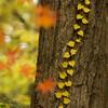 庫出し 秋の風景