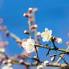 春に近づく