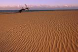 砂丘と流木
