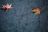 夏から秋へ