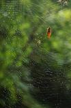 雨上がりの巣づくり