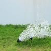 里山アート動物園2012Ⅰ