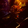 Burn in Autumn #1